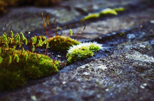 Moss, Plants, Green, Nature, Wild, Rock, Forest