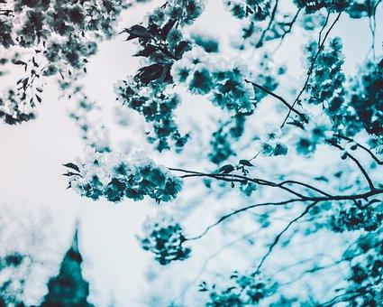 Tree, Flowers, Pink, Nature, Summer