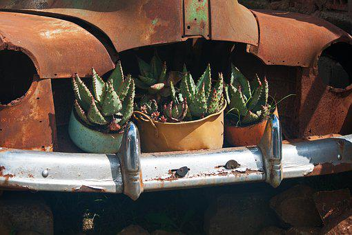 Plants In Old Car, Car Old, Vintage, Rusted, Bonnet
