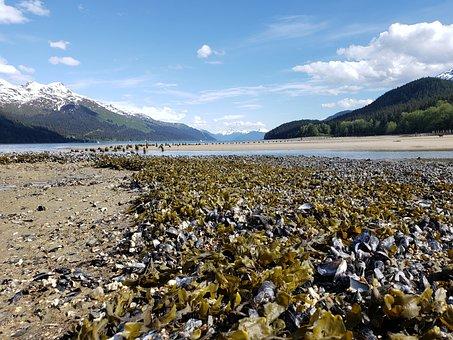 Juneau, Alaska, Sandy Beach, Seaweed, Gastineau Channel