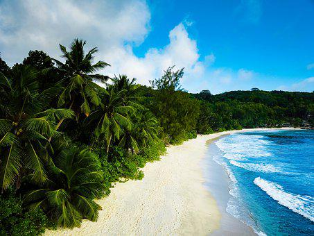 Seychelles, Palm, Sea, Beach, Island, Ocean, Tropical