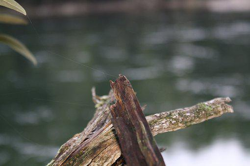 Nature, Web, Cobweb, Insect, Dew, Winter, Spiderweb