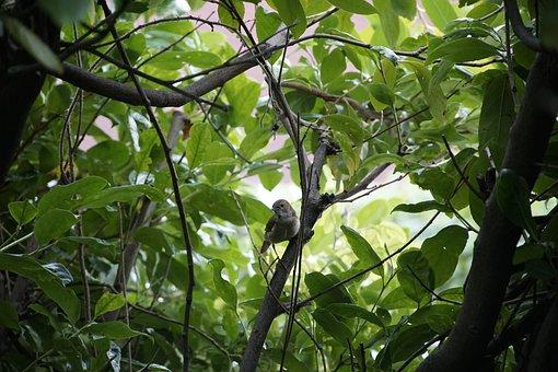 Phoenicurus, Female, Bird, Nature, Branch, Bush