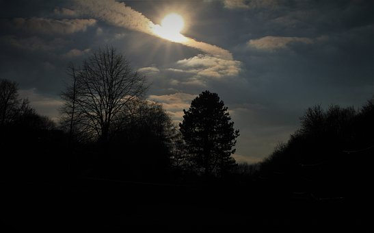 Sun, Backlighting, Sky, Trees, Early In The Evening