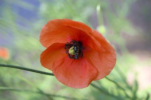 Flower, Flowers, Spring, Macro, Nature, Beauty