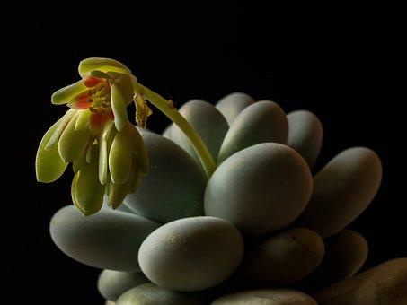 Sukulent, Stones, Pebbles, Flower