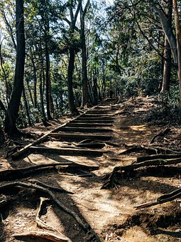 Hiking, Forest, Away, Trail, Nature