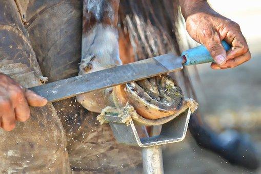 Farrier, Blacksmith, Horseshoe, Horse Hoof, Anvil