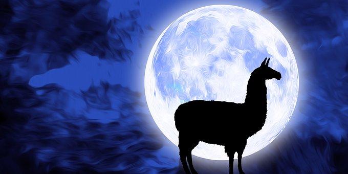 Llama, Animal, Lama, Alpaca, Moon, Night, Sky