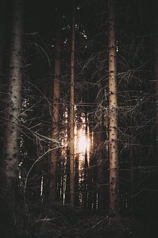 Forest, Cut, Old, Fell, Dark, Nature, The Sky, Light