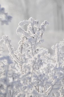 Plants, Winter, Frost, Nature, Ground Frost, Frozen