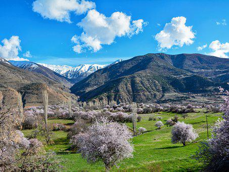 Spring, Almond Trees, Almond Blossoms, Nature, Tree