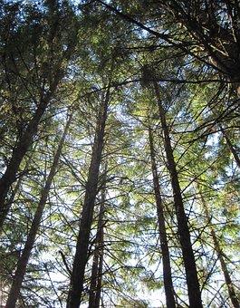 Abbey Woods, Mount Angel Abbey, Trees