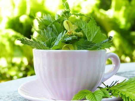 Cup, Herbs, Teacup, Tee, Wild Herbs, Detox, Drink