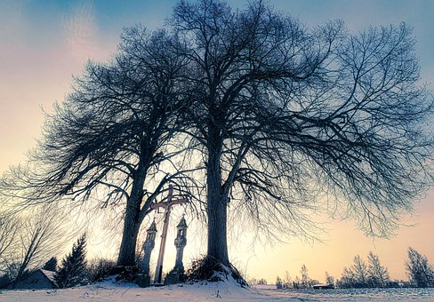 Winter, Tree, Snow, Nature, Landscape, Wintry