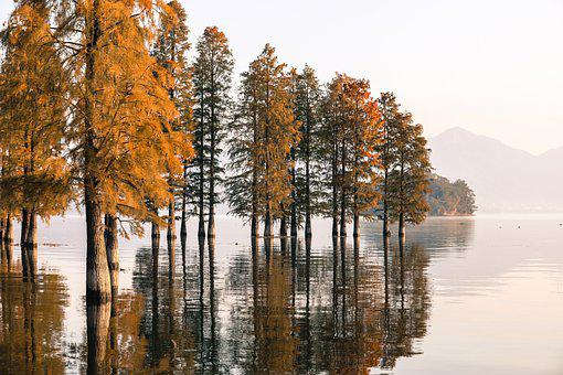 Branch, Fall, Tree, Lake, Autumn, Leaves, Forest