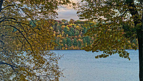 Fall Colors, Autumn, Leaves, Colorful, Forest, Nature