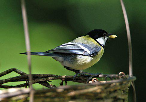 Tit, Feeding Place, Feeding, Songbird, Bird, Animal