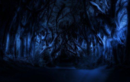 Trees, Night, Landscape, Dark, Calm, Spooky, Moon