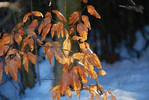 Leaves, Autumn, Fall Foliage, Nature, Forest