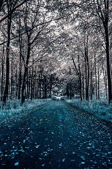 Path, Tree, Landscape, Trees, Fall