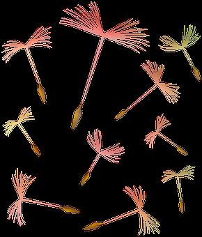 Dandelions, Flying, Weeds, Seeds