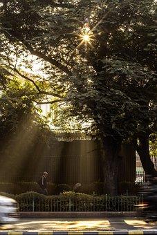 Sunlight, Trees, Forest, Landscape, Tree, Nature, Sun