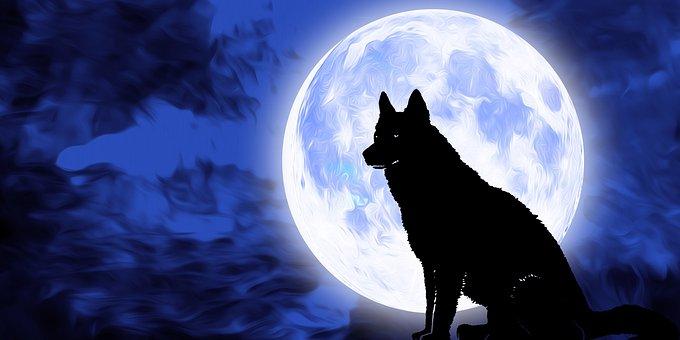 Dog, Pet, Animal, Moon, Night, Sky, Full Moon
