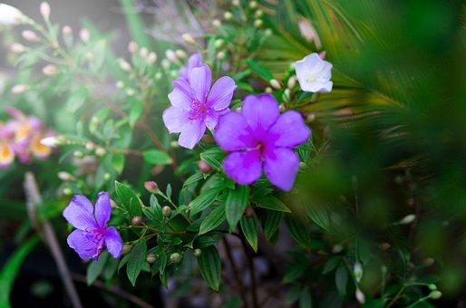 Spring, Garden, Flowers, Summer, Plant, Bloom, Blossom