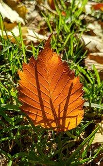 Leaf, Autumn, Forest, Nature, Colorful, Mood, Park