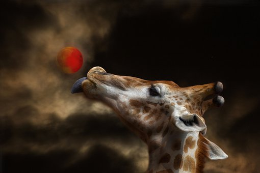 Giraffe, Moon, Sky, Night, Darkness, Animal, Nature