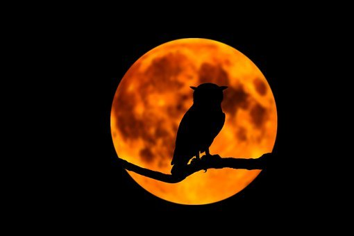 Owl, Moon, Night, Branch, Tree, Halloween, Moonlight