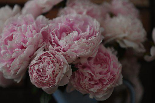 Peony, Pink, Flower, Vase, Decorate, House, Style