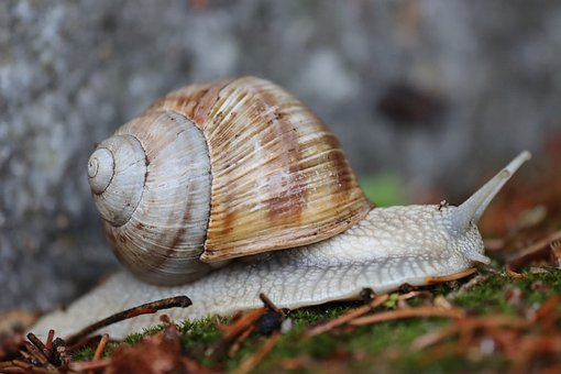 Snail, House Snail, Probe, Mollusk, Shell, Animal, Wall