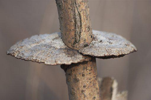 Nature, Forest, Tree, Bush, Fungus, Polypore, Detail