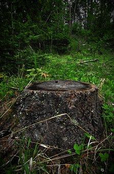 Stump, Woods, Wood, Nature, Tree, Cut