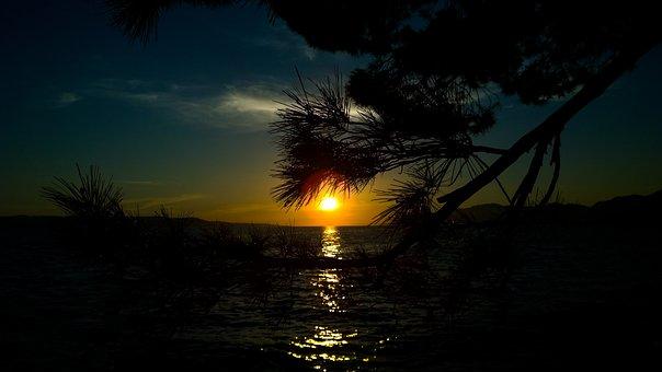Tree, Silhouette, Nature, Trees, Sun, Sunset, Landscape