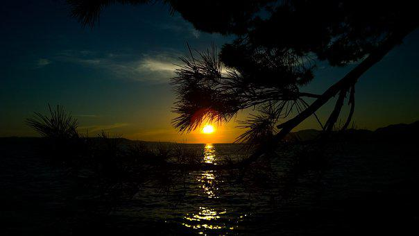Tree, Silhouette, Nature, Trees, Sun