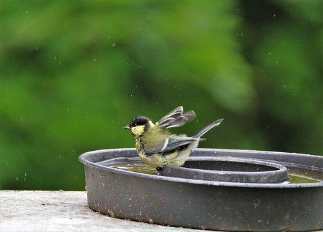 Tit, Young Animal, Bad, Watering Hole, Swim, Songbird