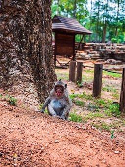 Angkor Wat, Cambodia, Angkor, Asia, Ruin, Buddhism, Old