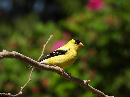 Bird, Wild, Animal, Yellow