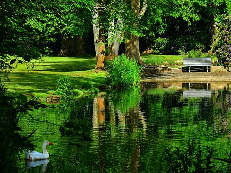 Pond, Water, Reflections, Goose, Bird