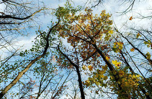 Trees, Branches, Nature, Forest, Autumn, Leaves, Dried