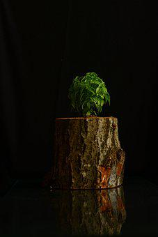 Basil, Plant, Flora, Healing, Ot, Flower, Billet, Tree