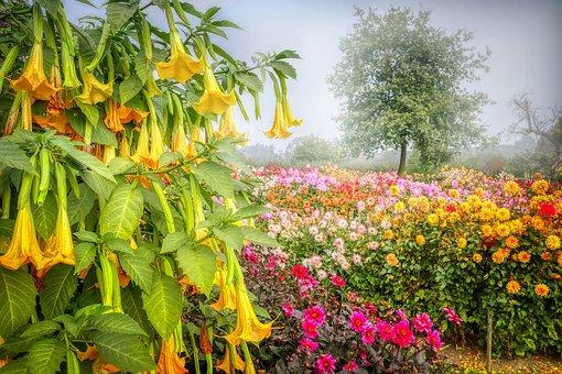 Flower Garden, Flowers, Bloom, Garden