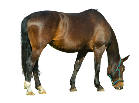 Horse, Gaul, Animal, Mammal, Isolated