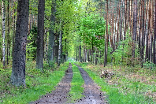 Forest, Green, Nature, Environment, Tree, Landscape