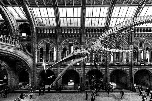 Natural History, Museum, England, Uk, Indoors, Science
