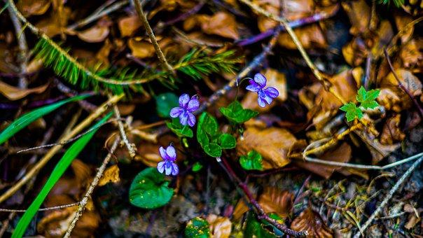 Nature, Green, Tree, Blossom, Bloom