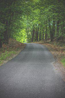 Road, Forest, Nature, Trees, Path, Landscape, Outdoors